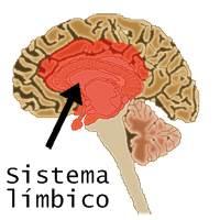 Anatomia do Sistema límbico: Localização das partes no cérebro