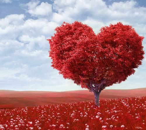 amor-biologico-social