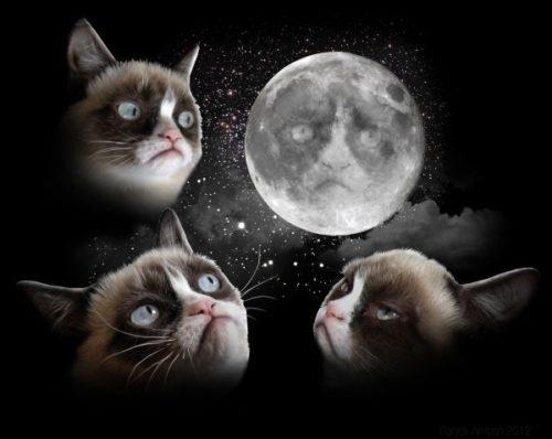 gatos e lua antropomorfia