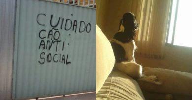 cuidado cão anti social