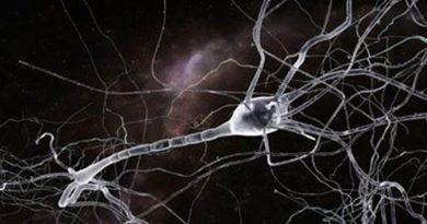 neuronio