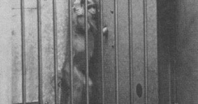 Filhote de macaco no poço do desespero - Harry Harlow