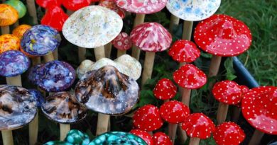 psilocibina cogumelos magicos