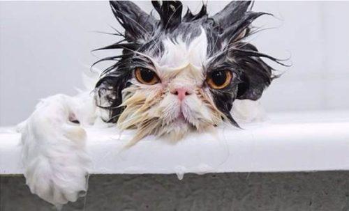 Ablutofobia Medo de tomar banho