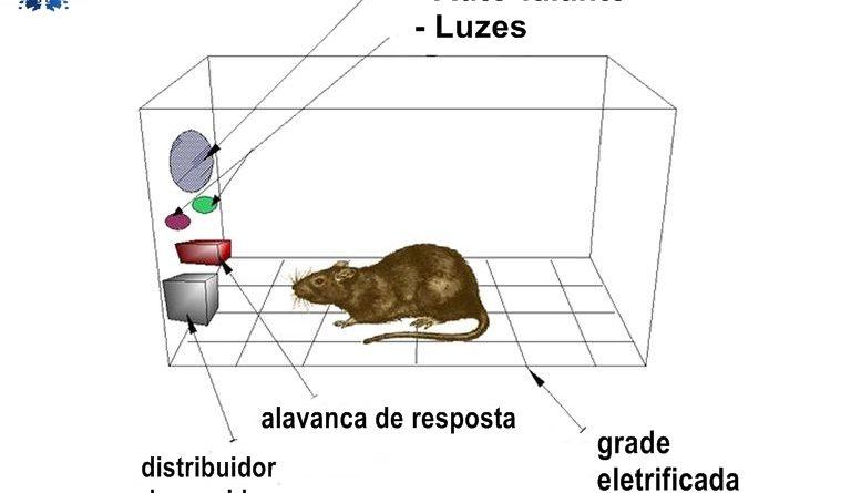 Ilustração de uma caixa de skinner