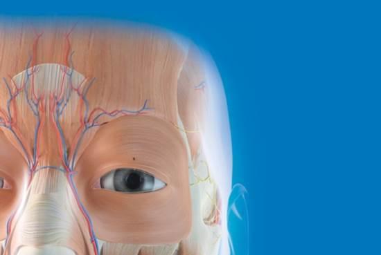 teste_de_cheiro_olfato_cerebro_neurologia