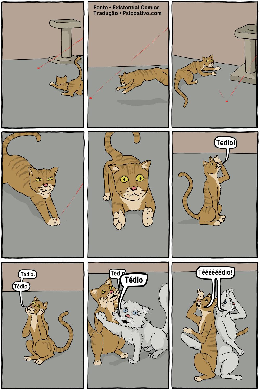 gato-filosofia