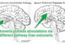 A Psicologia da Introversão e Extroversão
