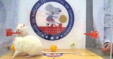 Ratos jogando Basquete? Sim! | ♥ Behaviorismo