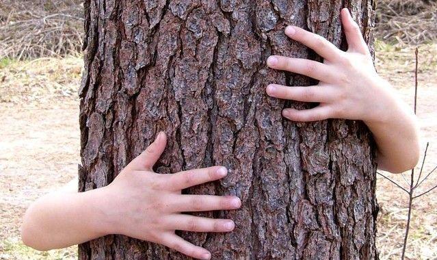 cuento: el árbol de las preocupaciones