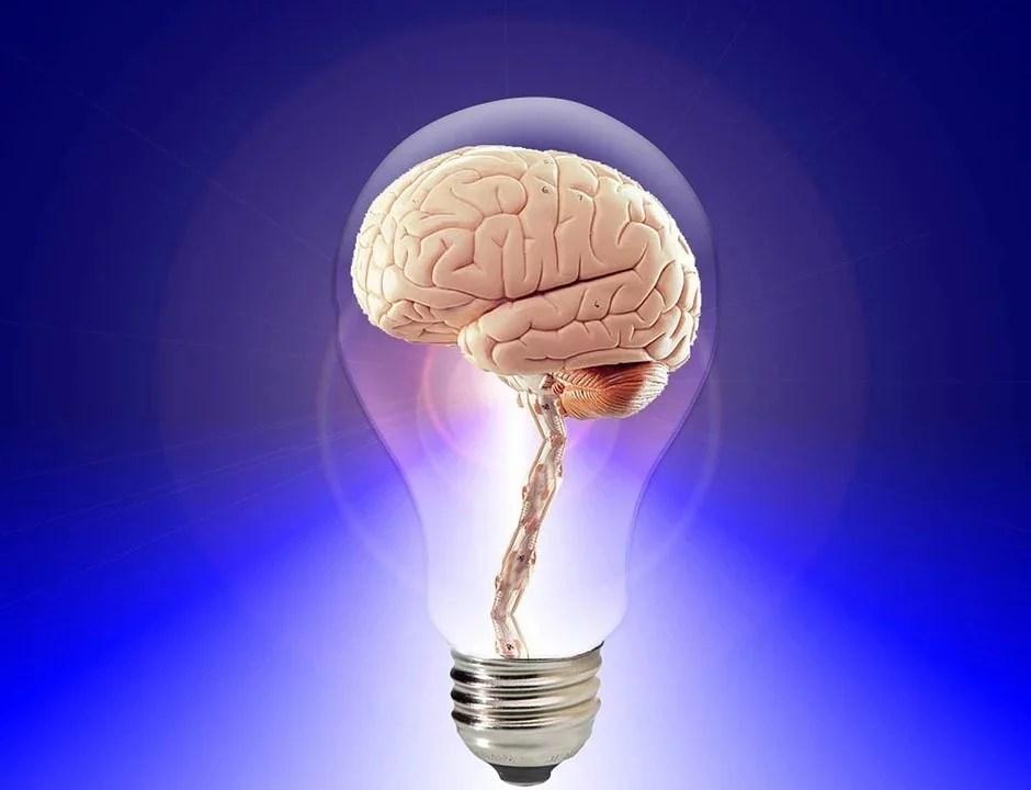 Neurogénesis adulta