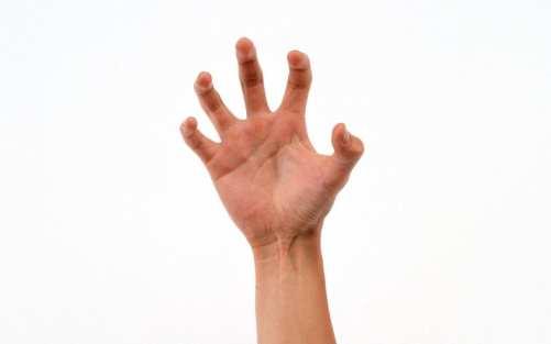 hands_00420395