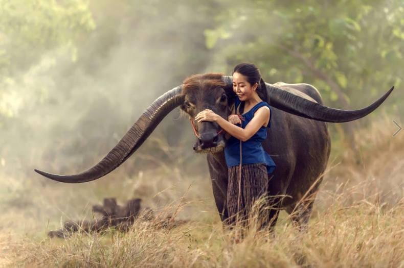 Photo by Jakkree Thampitakkul