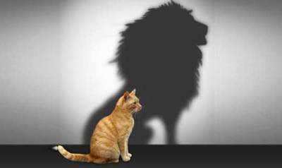 Gato con reflejo de león