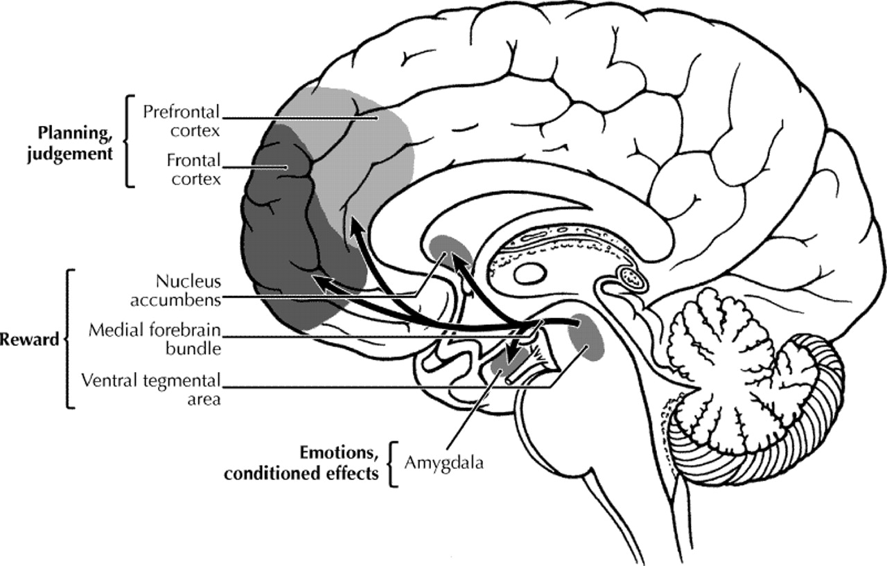 Hecht Gs Psyc 377 Exam 3 Study Guide