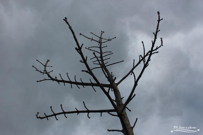 Skogen - en kall dag i april (5/5)
