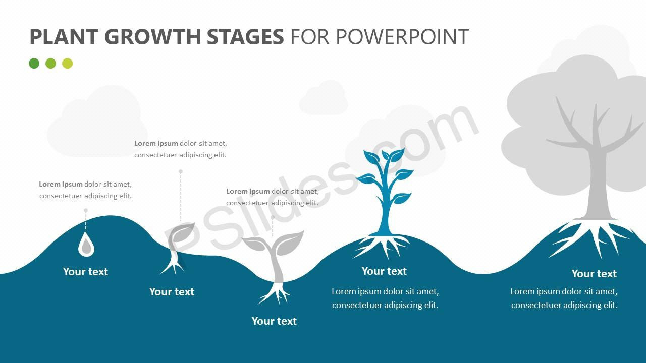 hight resolution of  plant growth stages diagram for powerpoint slide 2