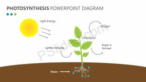 Photosynthesis PowerPoint Diagram | PSlides