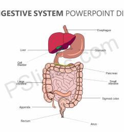 editable digestive system powerpoint diagram jpg [ 1280 x 720 Pixel ]