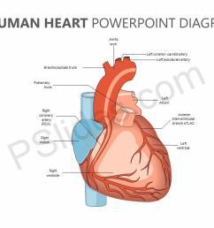 editable human heart powerpoint diagram jpg [ 1280 x 720 Pixel ]