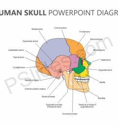 editable human skull powerpoint diagram jpg [ 1280 x 720 Pixel ]
