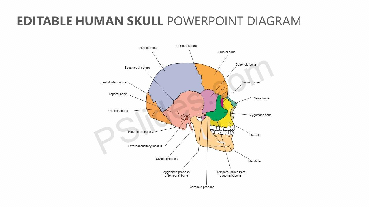 hight resolution of editable human skull powerpoint diagram jpg