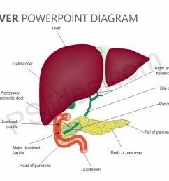 red liver diagram [ 1280 x 720 Pixel ]