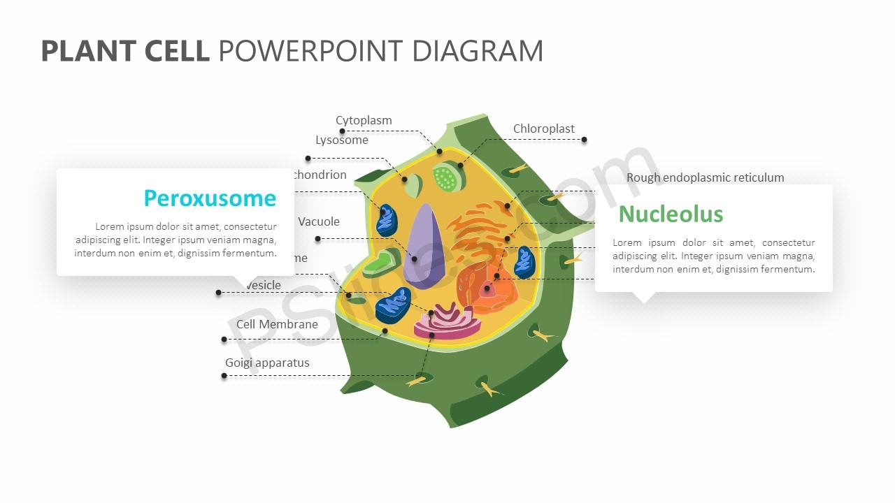 hight resolution of plant cell powerpoint diagram plant cell powerpoint diagram slide 2