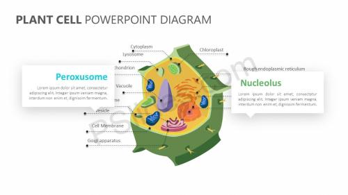 small resolution of plant cell powerpoint diagram plant cell powerpoint diagram slide 2
