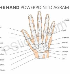 bones in the hand powerpoint diagram jpg [ 1280 x 720 Pixel ]