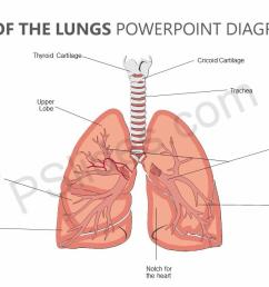 anatomy of the lungs powerpoint diagram jpg [ 1280 x 720 Pixel ]