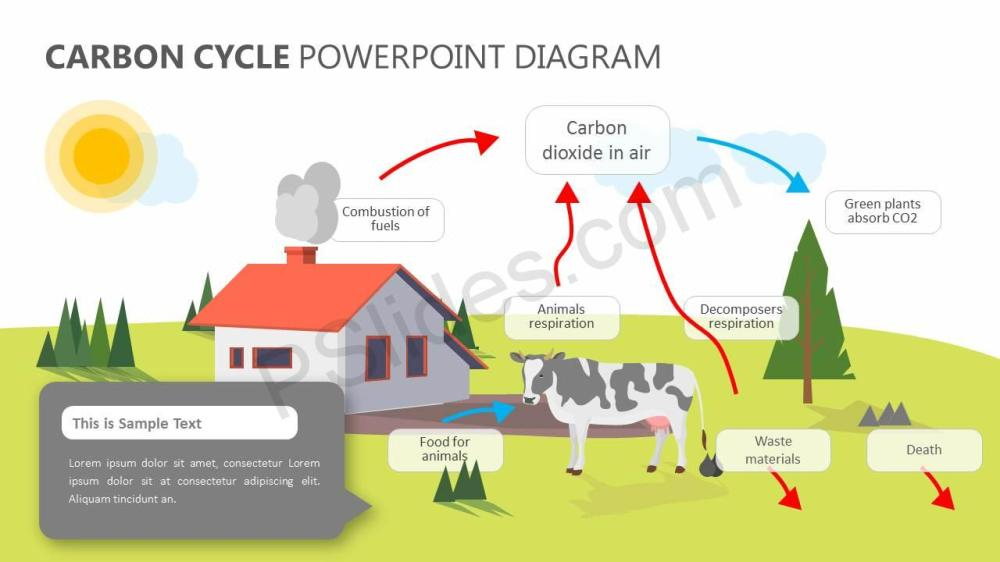 medium resolution of carbon cycle powerpoint diagram slide1