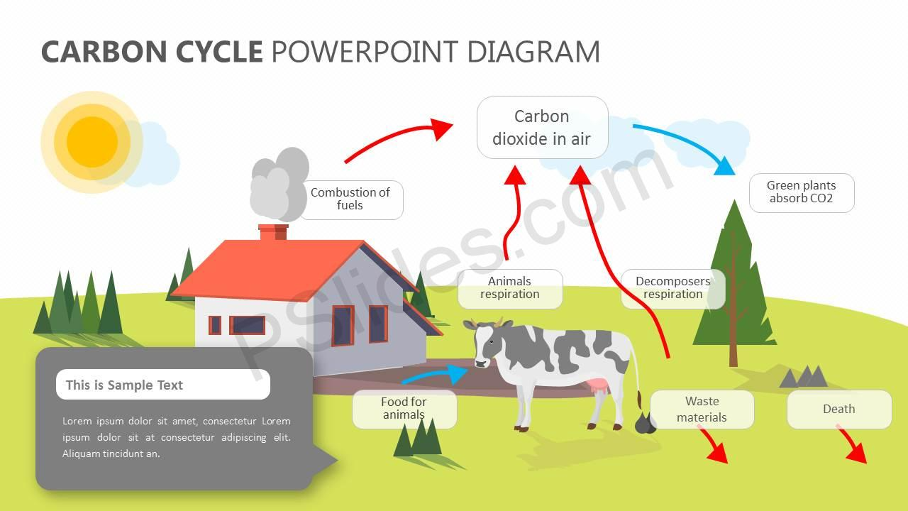hight resolution of carbon cycle powerpoint diagram slide1
