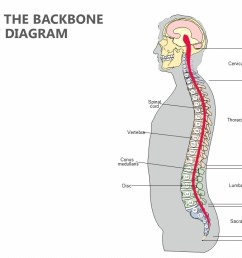 diagram of backbone wiring diagram category anatomy of the backbone powerpoint diagram pslides diagram of back [ 1280 x 720 Pixel ]