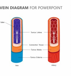 artery and vein diagram for powerpoint jpg [ 1280 x 720 Pixel ]