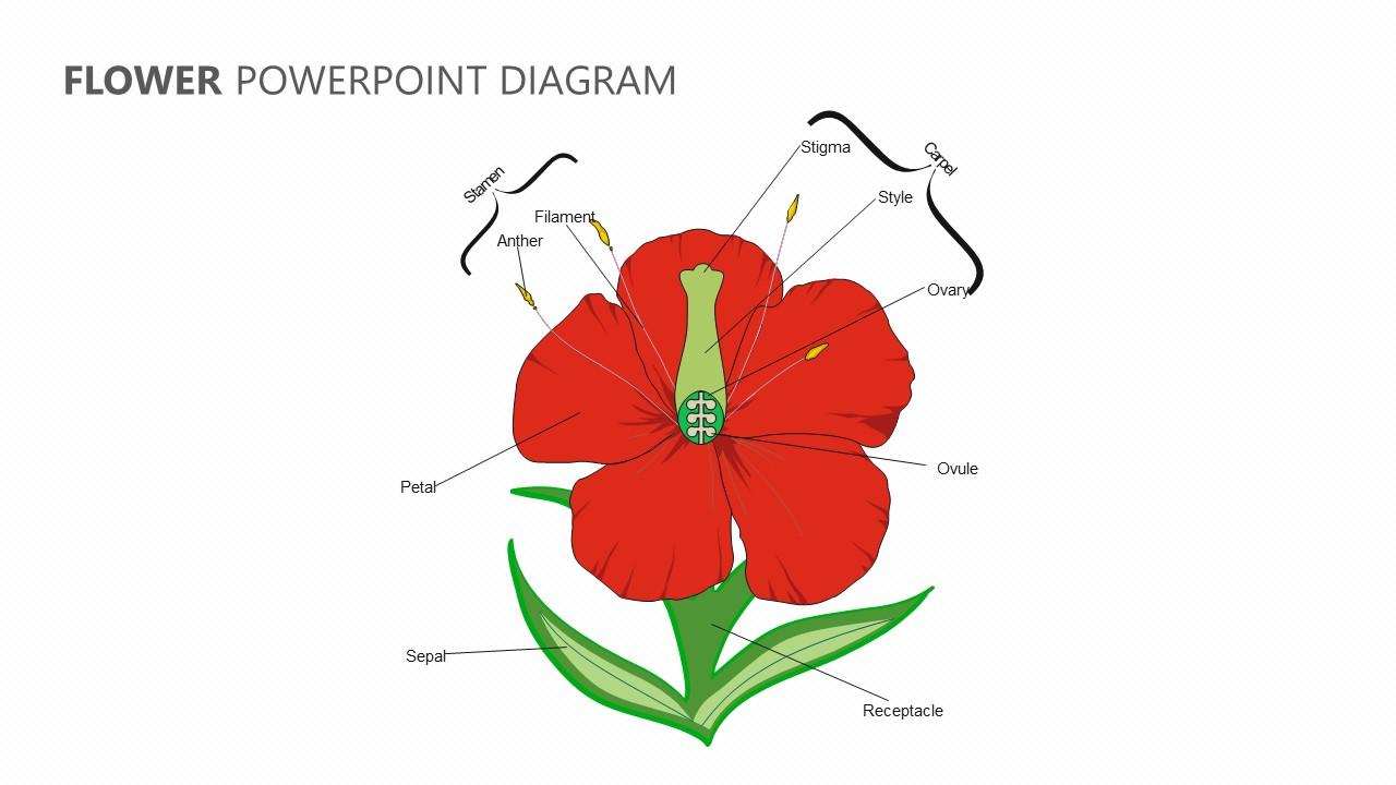 hight resolution of flower powerpoint diagram jpg