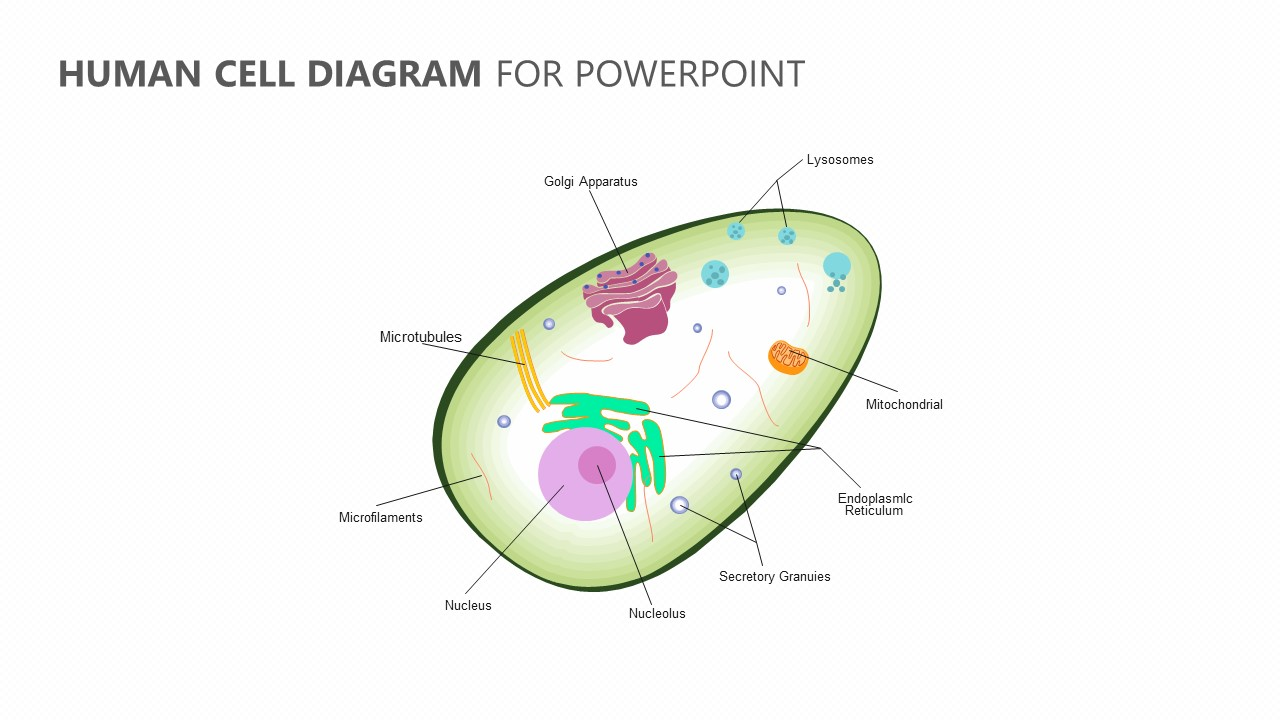 hight resolution of human cell diagram for powerpoint jpg