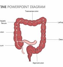 large intestine powerpoint diagram large intestine powerpoint diagram [ 1280 x 720 Pixel ]