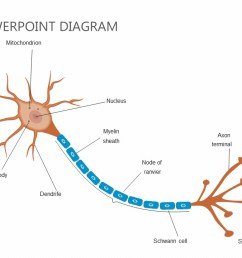 neuron diagram google wiring diagram m6 neuron diagram google [ 1280 x 720 Pixel ]