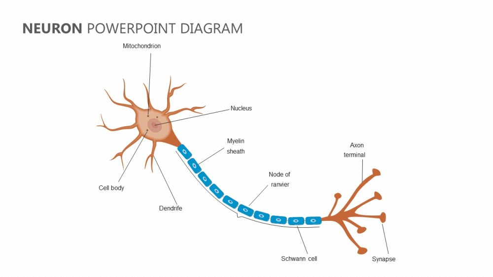 medium resolution of neuron diagram google wiring diagram m6 neuron diagram google