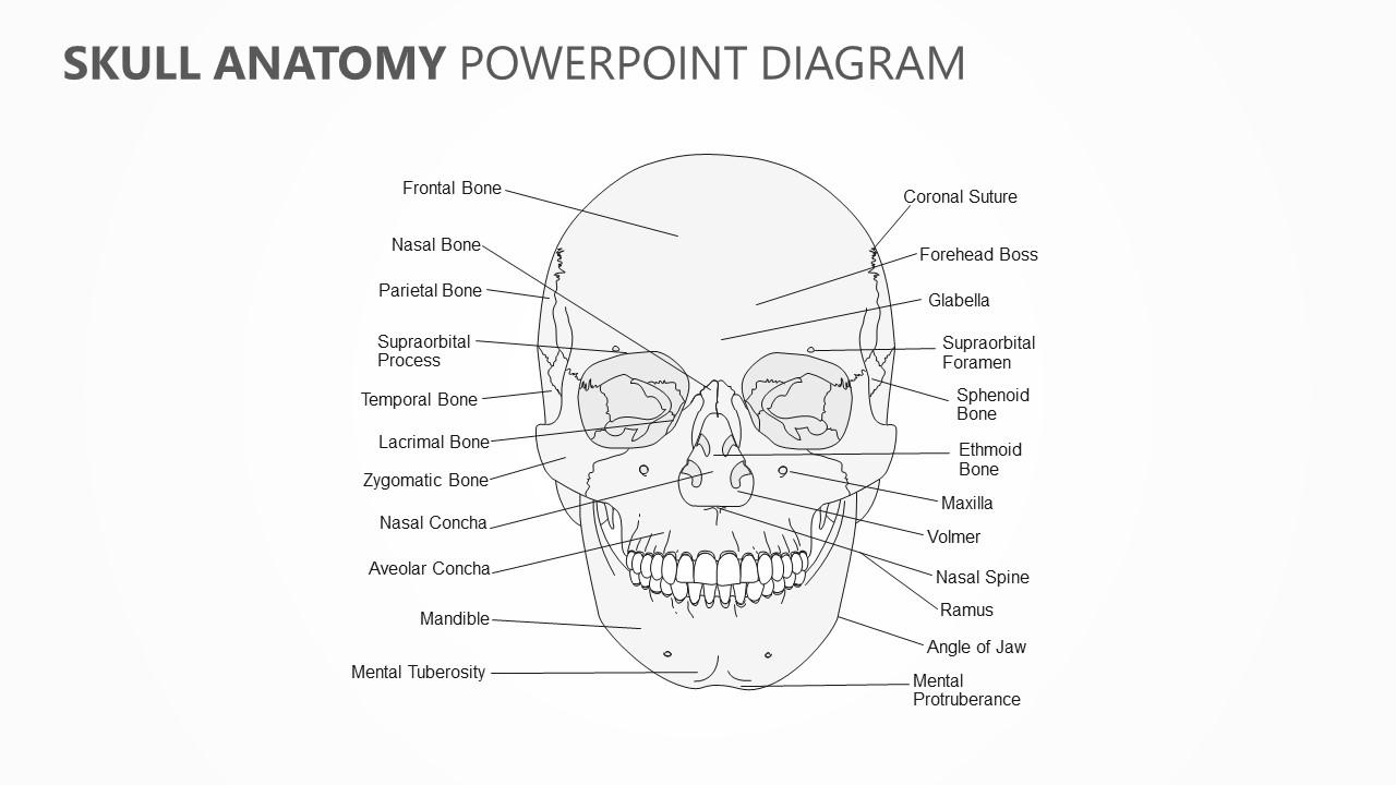 hight resolution of skull anatomy powerpoint diagram jpg