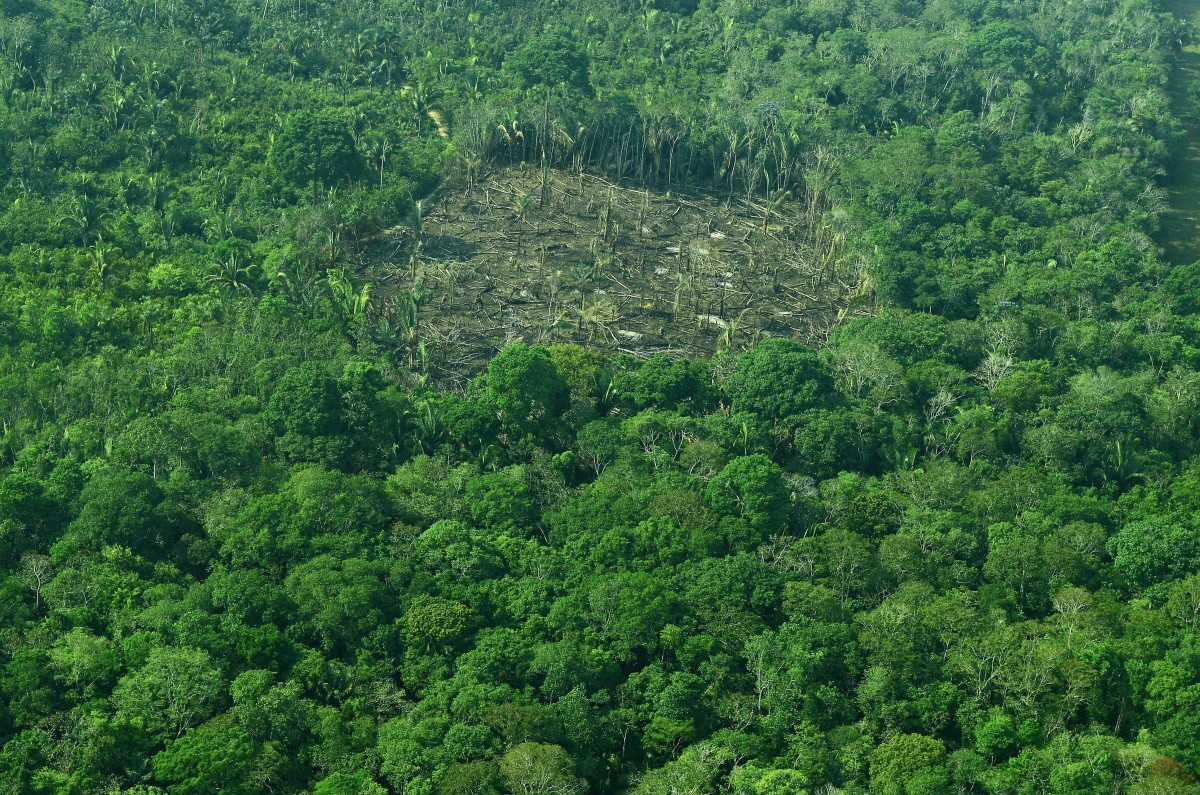 How A New Provision In Brazil S Forest Act Could Cost It A