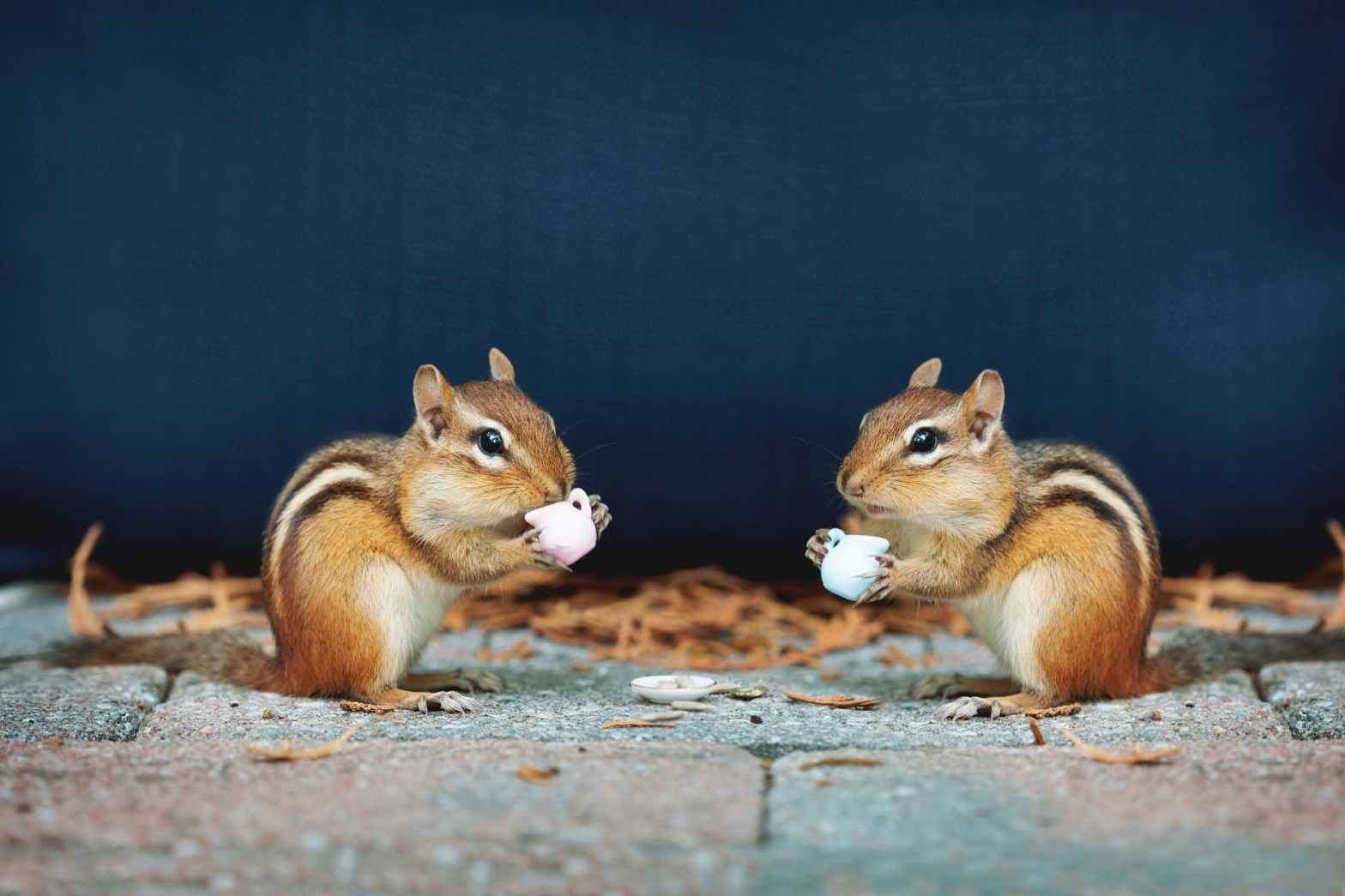 squirrels on concrete surface