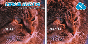Enfoque selectivo photoshop