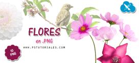 10 flores en PNG
