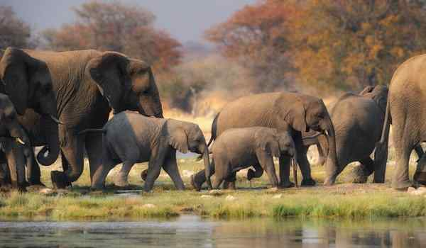 miért rossz az elefántok látása rövidlátás és tánc