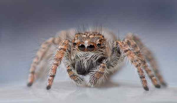 Tại sao không thể giết nhện trong nhà