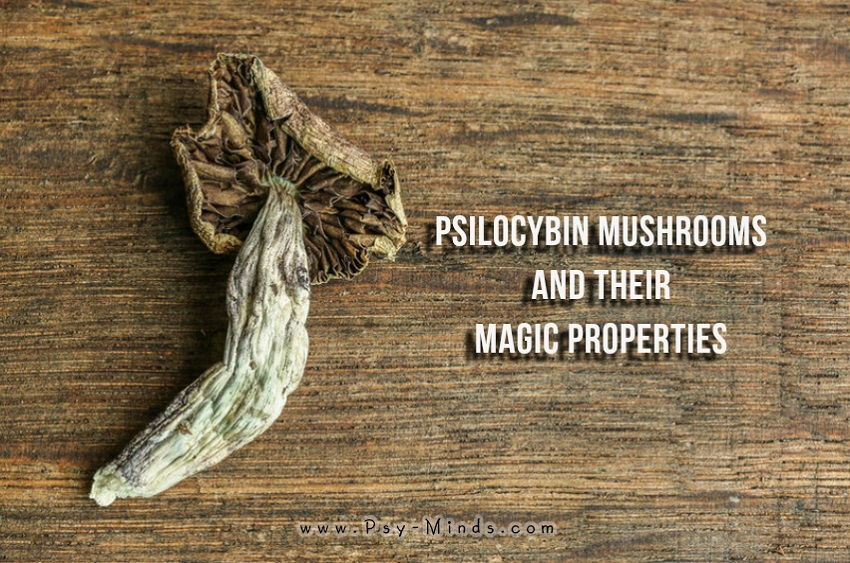 Psilocybin Mushrooms Magic Properties
