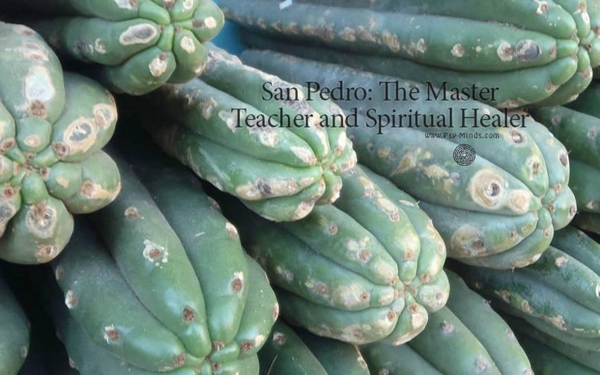San Pedro The Master Teacher and Spiritual Healer1