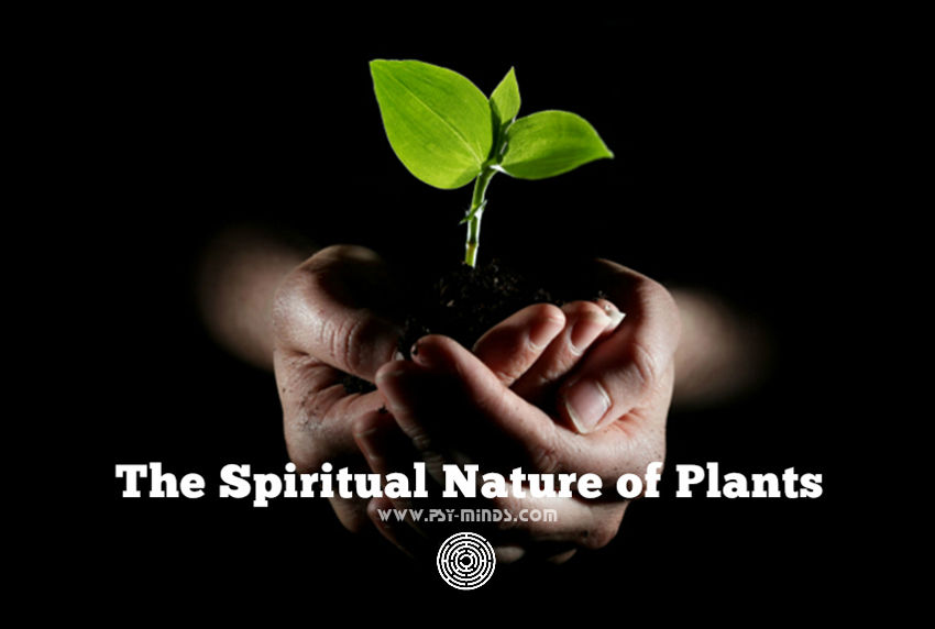 Spiritual Nature Plants